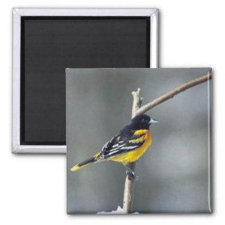 Baltimore Oriole Fridge Magnets