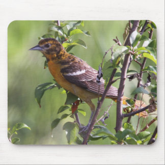 Baltimore Oriole Mouse Pad