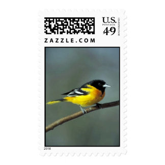 Baltimore Oriole on a branch Stamps