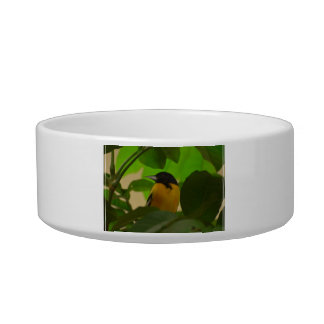 Baltimore Oriole Cat Water Bowls