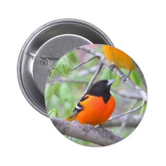 Baltimore Oriole Pinback Button