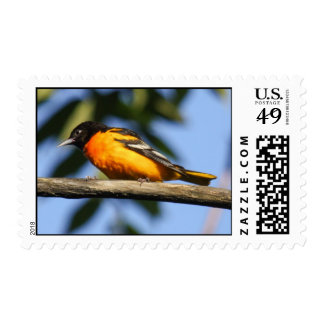 Baltimore Oriole Stamps
