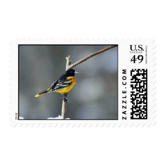 Baltimore Oriole Postage
