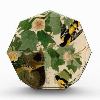 Baltimore Oriole Rare Audubon Acrylic Award