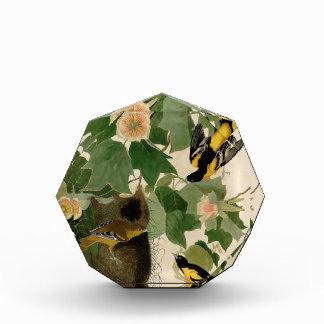 Baltimore Oriole Rare Audubon Award