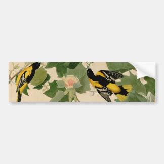 Baltimore Oriole Rare Audubon Bumper Sticker
