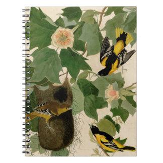 Baltimore Oriole Rare Audubon Notebook