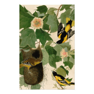 Baltimore Oriole Rare Audubon Stationery