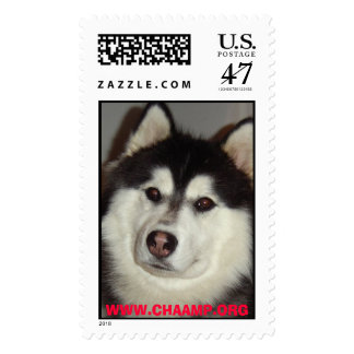 Balto small, WWW.CHAAMP.ORG Postage