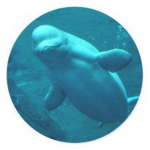 Baluga Whale Classic Round Sticker