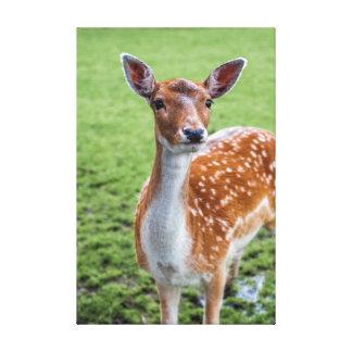 "Bambi (24.00"" x 16.00""), 1.5"", Single Canvas Print"