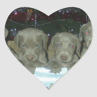 Bambi and Rockys Pups DOB 31 Oct 2009 003.jpg Heart Sticker