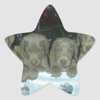 Bambi and Rockys Pups DOB 31 Oct 2009 003.jpg Star Sticker