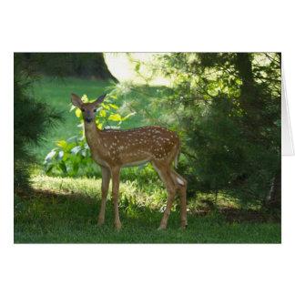 Bambi in Nauvoo Card