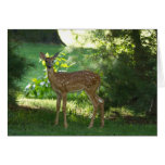 Bambi in Nauvoo Cards