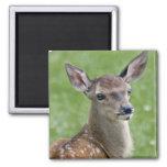 Bambi Magnet