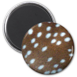 Bambi white dots on brown fur magnet