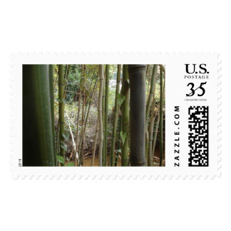 bamboo by the creek postage