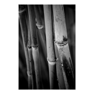 Bamboo Canes in Black and White Poster