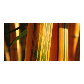 Bamboo closeup card
