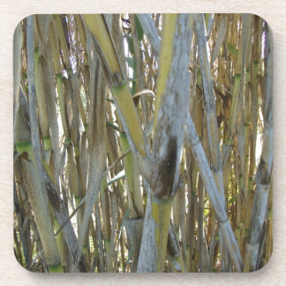 Bamboo Beverage Coasters