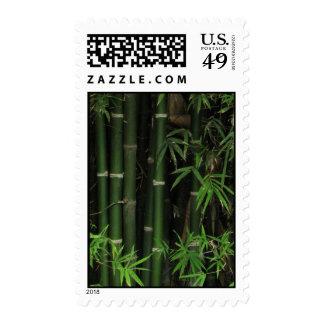 Bamboo ... Fao Rai, Nong Khai, Isaan, Thailand Postage Stamps