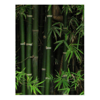 Bamboo ... Fao Rai, Nong Khai, Isaan, Thailand Postcard