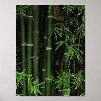 Bamboo ... Fao Rai, Nong Khai, Isaan, Thailand Poster