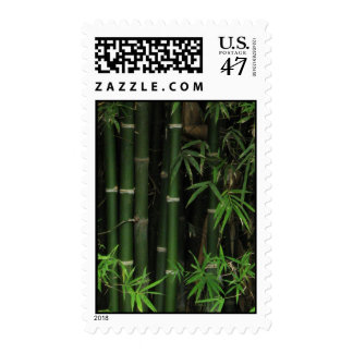Bamboo ... Fao Rai, Nong Khai, Isaan, Thailand Stamp