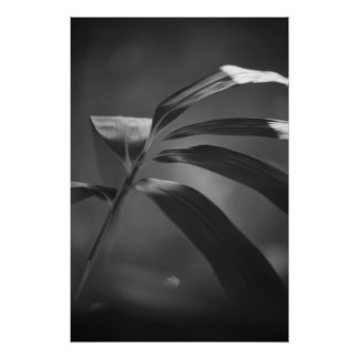 Bamboo Foliage Bokeh in Black and White Print
