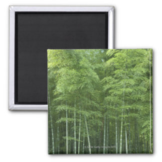 Bamboo Forest 2 Inch Square Magnet