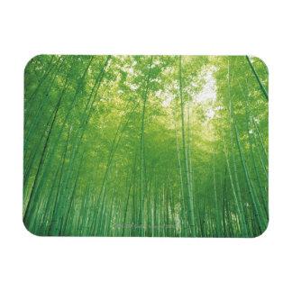 Bamboo Forest 2 Rectangular Photo Magnet