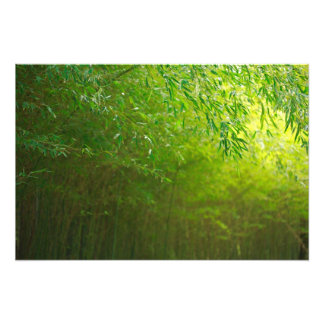 Bamboo forest art photo