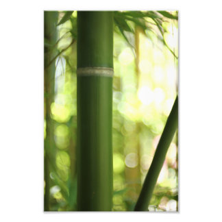 Bamboo Forest (Print) Photograph