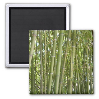 Bamboo Fridge Magnet