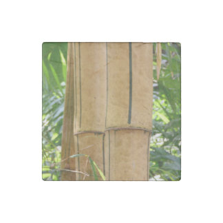 Bamboo Stone Magnet