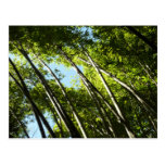 Bamboo Green Forest Nature Photography Postcard