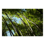 Bamboo Green Forest Nature Photography Poster