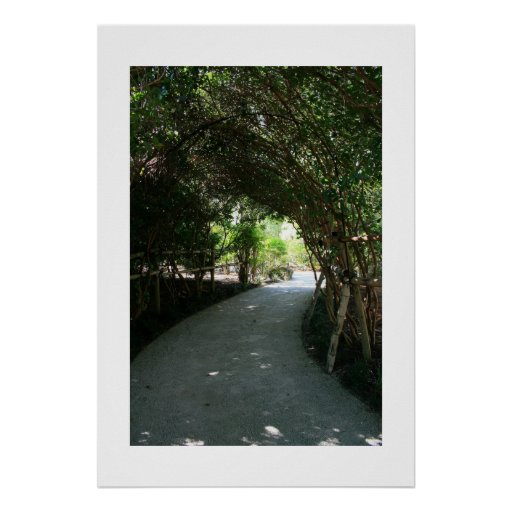 Bamboo Grove Canopy Poster