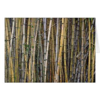 Bamboo in Hilo, Hawaii Card