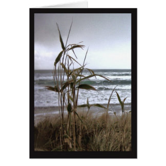 Bamboo in the Dunes Greeting Card