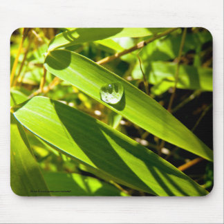 Bamboo Leaves With Resting Water Droplet Mousepad