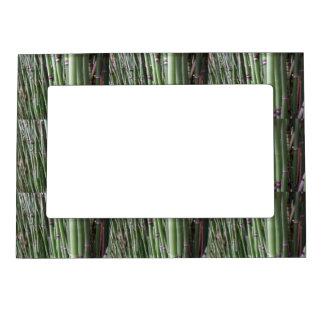 Bamboo magnetic frames