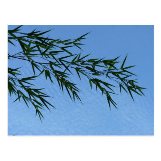 bamboo on sky of clouds postcard