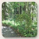 Bamboo Path Coasters