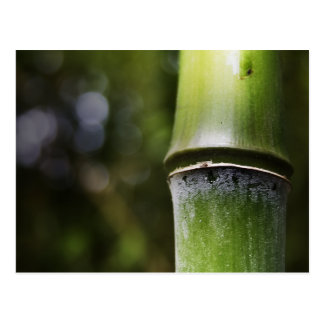 Bamboo Postcard (color)