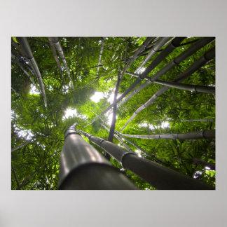 Bamboo Skylight Print