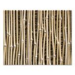 Bamboo Texture Photographic Print