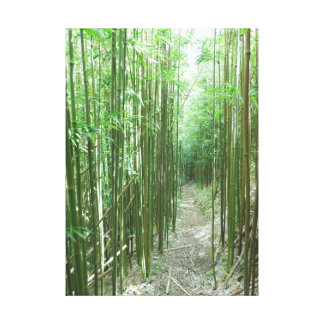 Bamboo Trail Canvas Print