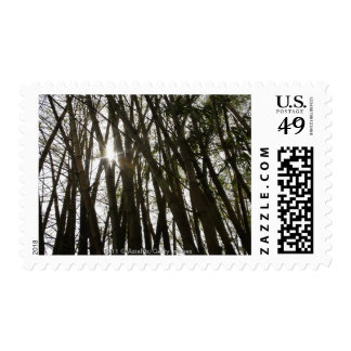 bamboo tree with stalks and sunlight bursting postage